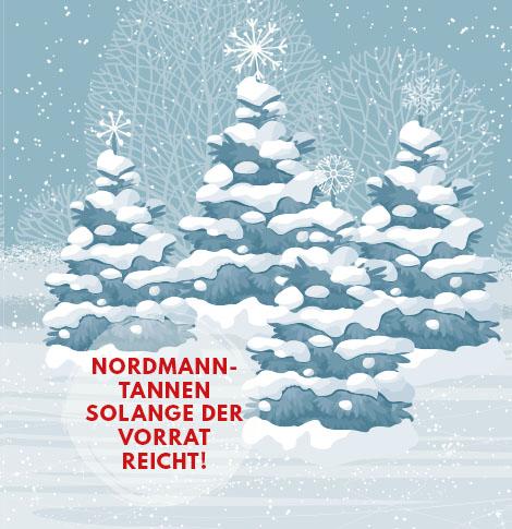 Nordmanntannen-Verkauf bei Möbel Kraft