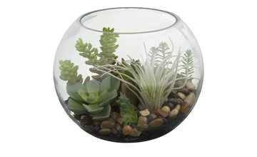 Sukkulente im Glas