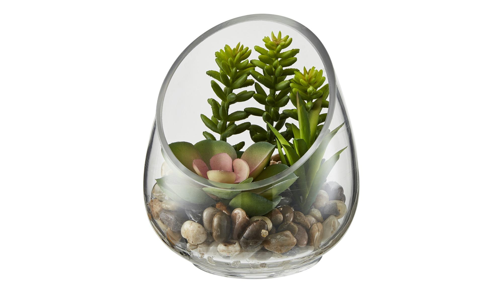 Sukkulente im Glas - grün - Glas , Naturprodukte, Kunststoff - 12 cm - Dekoration > Kunstblumen - Möbel Kraft   Dekoration > Dekopflanzen > Kunstpflanzen   Sconto