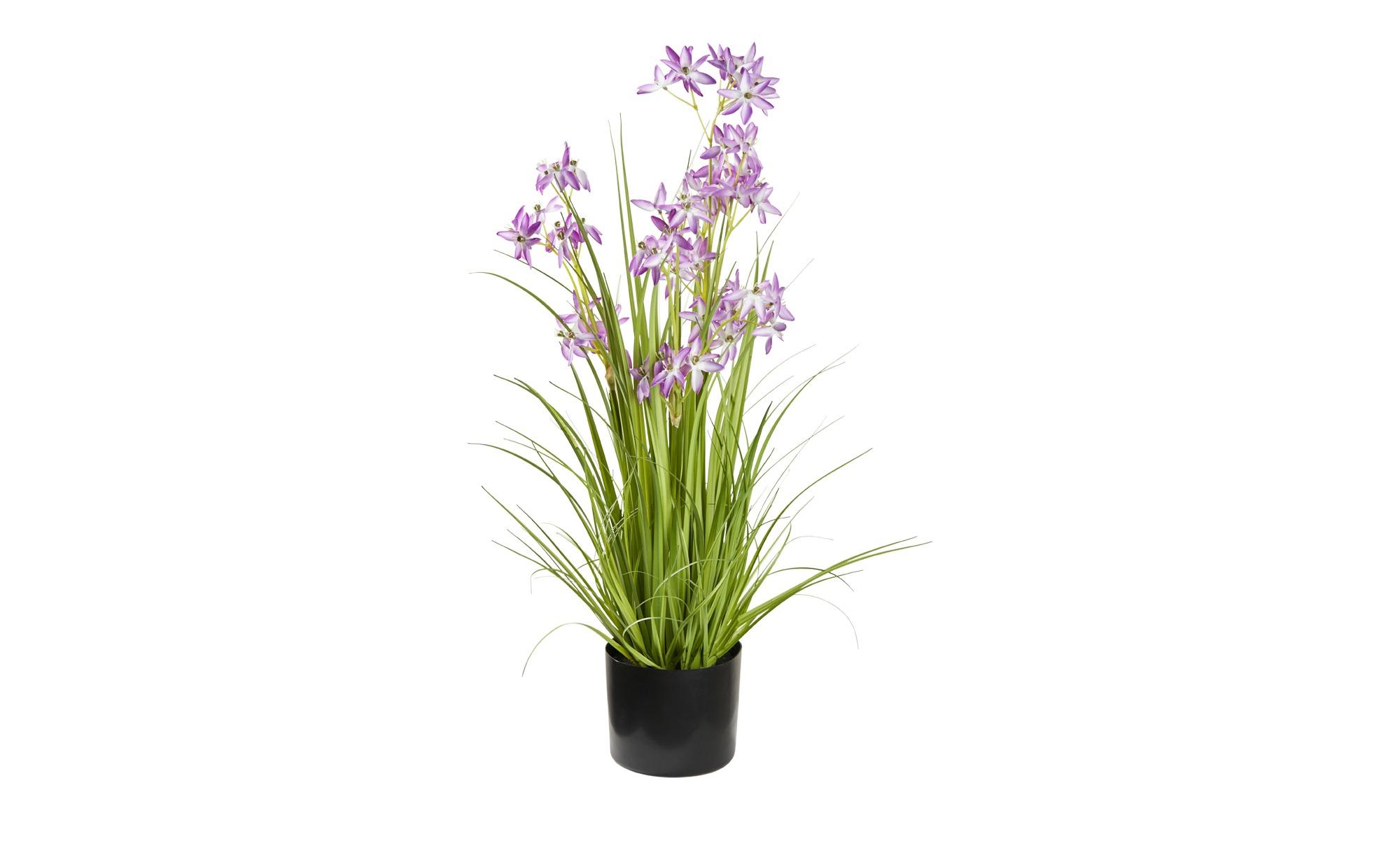 Grasbüschel - lila/violett - Kunststoff - 79 cm - Dekoration > Kunstblumen - Möbel Kraft | Dekoration > Dekopflanzen > Kunstpflanzen | Möbel Kraft